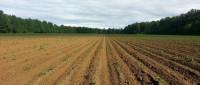 国有农用地承包经营适用哪编的规定