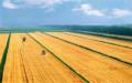 農村土地可以永久性轉讓合法嗎